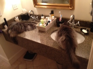 I think it's obvious why I need double sinks.  It's a deal breaker for me...